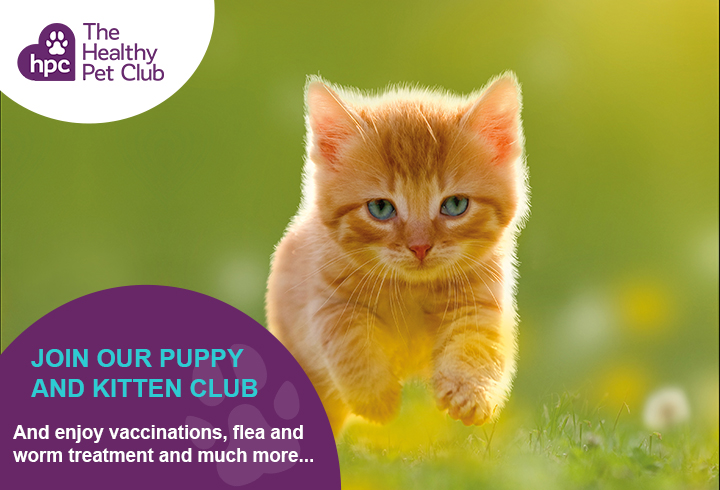 Healthy Pet Club kittens